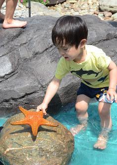 タッチングプールでヒトデと遊ぶ子ども=高知市浦戸の桂浜水族館で、柴山雄太撮影