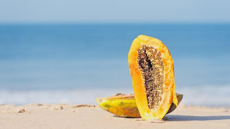 砂 の 果実 歌詞