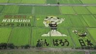 金メダルを手にした星奈津美選手が描かれた「こしがや田んぼアート」=越谷市で
