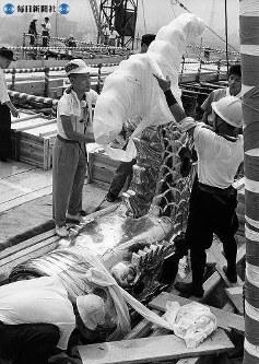 名古屋城天守閣に取り付けた後、オス、メスのシャチのサラシを取りはずした =1959(昭和34)年8月15日