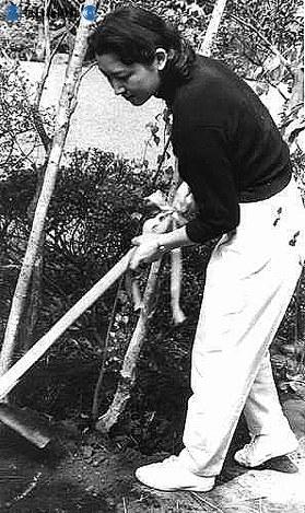 皇室に入ってからのお印が白樺と決まった後、皇太子さまとの出会いがあった軽井沢から白樺の若木3本を自宅に取り寄せ、自ら植樹する美智子さま=1959年(昭和34年)4月5日撮影