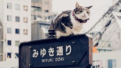 東京・銀座のみゆき通り