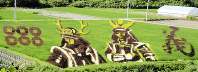 上杉景勝(右)と真田幸村の絵柄が浮かぶ田んぼ=山形県米沢市簗沢で2016年7月、佐藤良一撮影