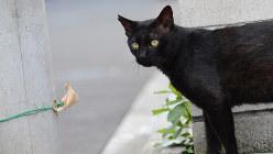 自由に散歩する黒い猫=東京都新宿区で2016年7月18日、内藤絵美撮影