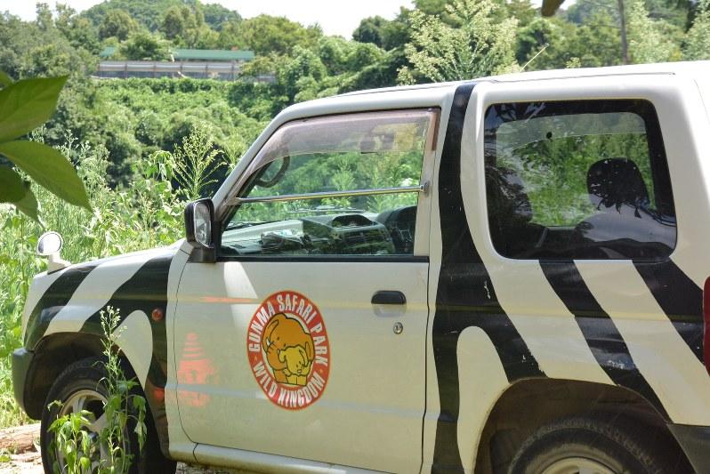サファリパーク 事故 群馬 群馬サファリパークで事故 トラ、ゾウ、クマ過去も繰り返しトラブルあった!