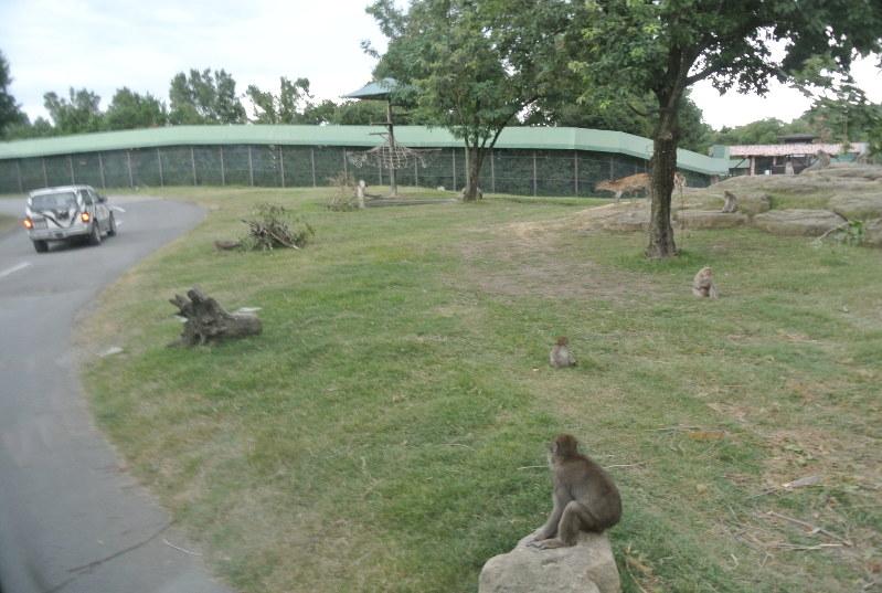 サファリパーク 事故 群馬 飼育員が体重2トンのゾウに踏まれ重傷 「群馬サファリパーク」で