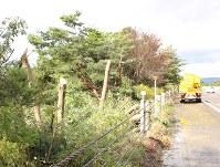 強風で倒れ高速バスにぶつかった木の残った幹=矢巾町の東北自動車道下り線で
