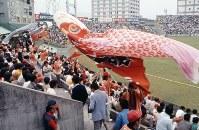 広島市民球場に泳ぐ広島カープ応援団の名物「ヒゴイ」。この日のヤクルト戦に勝利し、優勝マジックは2に=1975年10月11日撮影