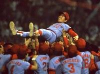 1984年、セ・リーグ優勝を飾った広島カープ。ナインに胴上げされる古葉竹識監督=横浜球場で1984年10月4日撮影