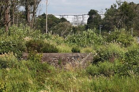 海から約250メートル。大熊町の帰還困難区域にある愛宕神社。震災前には階段を上がると社殿があり、境内では盆踊りが行われていたという。現在は一帯にうっそうと草が生い茂る。奥には第1原発のタンクが見える=2016年9月6日、小出洋平撮影