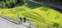 象や気球の絵が現れた田んぼアート=愛媛県伊予市中山町中山で、黒川優撮影
