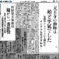 大阪市動物園では「日食時における動物生態変化の観察」を試みたが、普段から新世界の電飾や夜間開園時の投光器や客のカメラのフラッシュに慣れていることもあってか、たいがいは平気なようであった=1936(昭和11)年6月20日、大阪毎日新聞朝刊