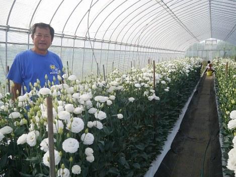 浪江町でのトルコギキョウを栽培する川村さん=冠木雅夫撮影