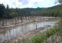 台風9号の影響で茶色く濁り、護岸工事のため排水されて水量も減った「青い池」=北海道美瑛町で2016年9月1日撮影(国土交通省北海道開発局提供)