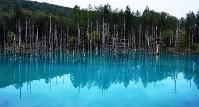 災害から復旧し、元の美しいエメラルドブルーに戻った「青い池」=北海道美瑛町で2016年9月14日午後5時29分、手塚耕一郎撮影