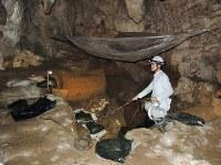 サキタリ洞遺跡の発掘現場。棒で指し示したあたりで世界最古の釣り針が出土した=沖縄県南城市で2016年9月17日17時42分、大森顕浩撮影