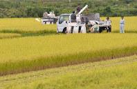 輸入米増加を懸念する声は農家の間に根強い