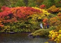赤や黄色の紅葉で彩られた、大雪高原温泉沼めぐりコースを楽しむ登山者ら=北海道上川町で2016年9月23日、手塚耕一郎撮影