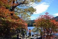 サラサドウダンが赤く、ダケカンバが黄色く染まった池畔=長野県の北八ケ岳の白駒池で2016年9月30日、武田博仁撮影