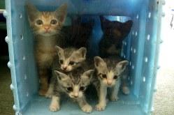殺処分される直前、プラスチックのゲージに入れられる子猫たち=和歌山県の動物愛護センターで2015年8月28日、稲生陽撮影