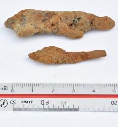 大型建物跡や鍛冶工房跡などが見つかった稲部遺跡で、出土した矢尻=滋賀県彦根市で望月亮一撮影