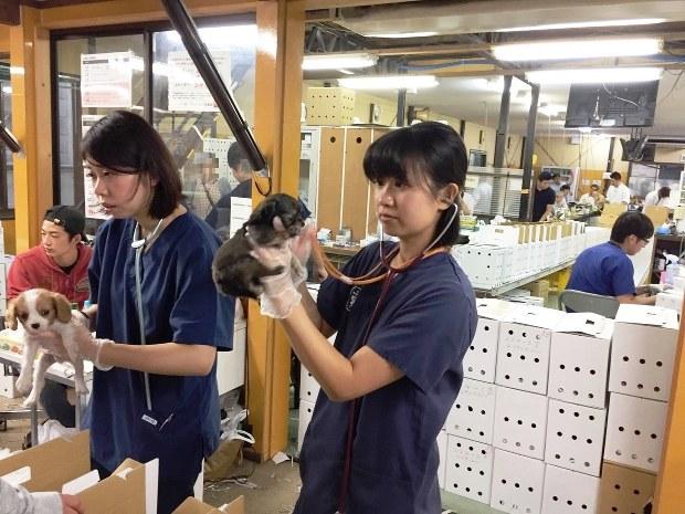 獣医2人によるペットの検査。オークション会場の隣で行われていた