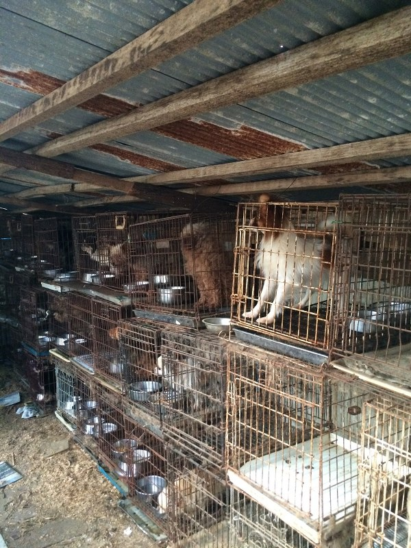 栃木県の「引き取り業者」の犬舎。劣悪な飼育環境だ=2016年1月16日、日本動物福祉協会撮影