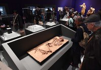 A reproduction of a human skeleton is seen on display in an exhibition room themed on the Cro-Magnons, at the National Museum of Nature and Science in Ueno, Tokyo on Oct. 31, 2016. (Mainichi)