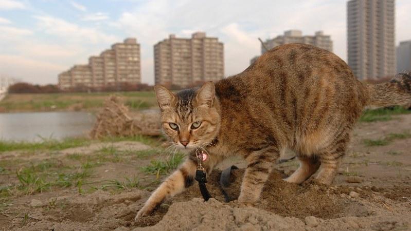 多摩川で生き抜き、現在は他界した猫=小西修さん撮影