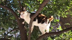 十数年にわたり公園で暮らしていたボスのメス猫。最後は雨に打たれて死んでいた=駅義則撮影
