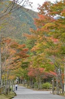紅葉に包まれた治部坂高原の石畳=長野県阿智村浪合で2016年10月26日、湯浅聖一撮影