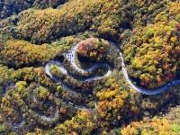 紅葉の見ごろを迎えた「いろは坂」=栃木県日光市で2016年10月29日、本社ヘリから北山夏帆撮影