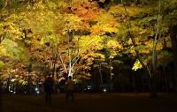 ライトアップされた香雪園の紅葉=函館市で2016年10月27日、遠藤修平撮影