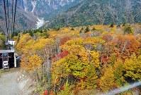 鮮やかに色付いた紅葉=岐阜県高山市の新穂高ロープウェイのゴンドラから2016年10月30日、中村宰和撮影