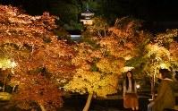 試験点灯で浮かび上がった永観堂禅林寺の紅葉=京都市左京区で2016年11月4日、小松雄介撮影