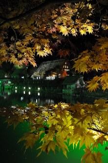 ライトアップされている紅葉と合掌造り「旧西岡家住宅」=岐阜県高山市で2016年11月3日、中村宰和撮影