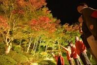 色づき始めたモミジ。夜空の下でひときわ鮮やかに映る=京都府与謝野町明石の慈徳院で2016年11月9日、安部拓輝撮影