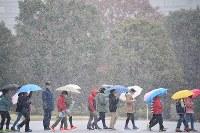 降りしきる雪の中、国会議事堂の見学コースを歩く小学生たち=東京都千代田区で2016年11月24日午前9時10分、川田雅浩撮影