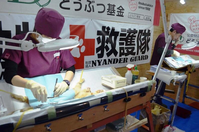 不妊手術を行う公益財団法人「どうぶつ基金」の獣医師2人=駅義則撮影