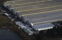 鳥インフルエンザの陽性反応が出た鶏が見つかった養鶏場=新潟県関川村で2016年11月29日午前9時半、本社機「希望」から