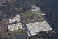 鳥インフルエンザの陽性反応が出た鶏が見つかった養鶏場=新潟県関川村で2016年11月29日午前9時25分、本社機「希望」から