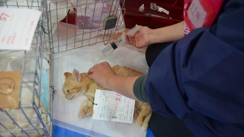 不妊手術を終えた猫に背中から水分を補給する=11月25日、駅義則撮影