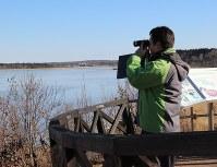弱った野鳥がいないか双眼鏡で調べる根室振興局の職員=根室市の風蓮湖で
