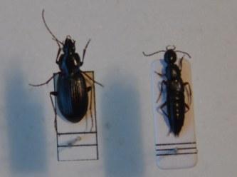 甲虫類:昆虫4新種一挙に発見 長...