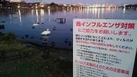 半数のコブハクチョウが死んだ千波湖と注意喚起を促す看板
