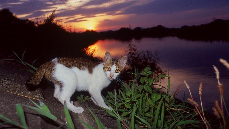 多摩川の河原で生き抜き、現在は他界した猫たち=小西修さん撮影