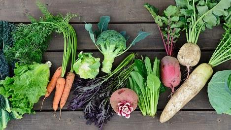 久松農園でとれた冬が旬の野菜=久松農園提供