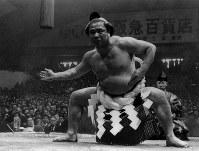 【44代】栃錦清隆=1954年9月撮影
