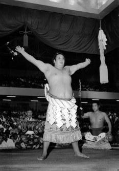 【43代】吉葉山潤之輔=1954年9月20日撮影