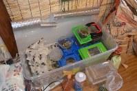 シェアハウスではさまざまな昆虫を飼育。その設備は市販の道具を活用するなど工夫が凝らされている=東京都世田谷区羽根木1で2017年1月27日午後4時54分、錦織祐一撮影